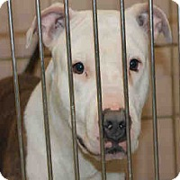 Adopt A Pet :: OLIVER - Chicago Ridge, IL