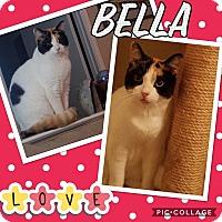 Adopt A Pet :: Bella - Keller, TX