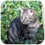 Photo 2 - Domestic Shorthair Cat for adoption in Columbia, Maryland - Luna