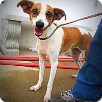 Adopt A Pet :: Penelope - Richmond, VA
