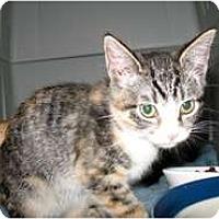 Adopt A Pet :: Jezabelle - Shelton, WA