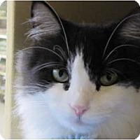Adopt A Pet :: Contessa - Modesto, CA