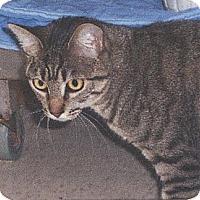 Adopt A Pet :: Maggie - El Cajon, CA