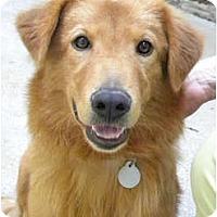 Adopt A Pet :: Gideon - Hagerstown, MD