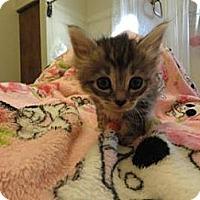 Adopt A Pet :: Anabelle - Phoenix, AZ