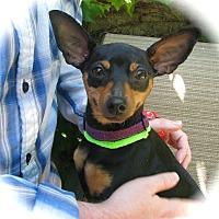 Adopt A Pet :: Layla - Mount Laurel, NJ