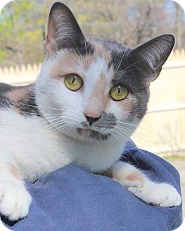 Calico Cat for adoption in Central Islip, New York - Kara