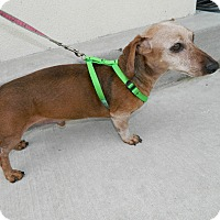 Adopt A Pet :: Guiness - Umatilla, FL