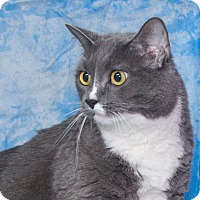 Adopt A Pet :: Kesha - Elmwood Park, NJ