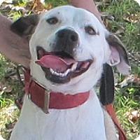 Adopt A Pet :: Liberty - Allentown, PA