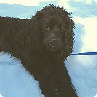 Adopt A Pet :: Dexter - New Oxford, PA