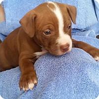 Adopt A Pet :: Otis - Windermere, FL