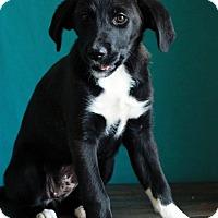 Adopt A Pet :: Lilac - Waldorf, MD