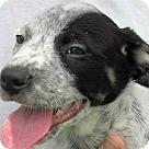 Adopt A Pet :: Burke