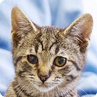 Adopt A Pet :: Snow - Lincolnton, NC