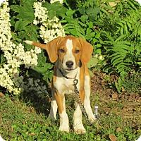 Adopt A Pet :: CARMEN - Hartford, CT