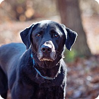 Adopt A Pet :: Willy - Brattleboro, VT