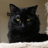 Adopt A Pet :: Lotta Neumann - San Diego, CA