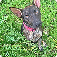 Adopt A Pet :: Mowgli - Albertville, MN