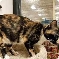 Adopt A Pet :: Charlotte - Colonial Heights, VA