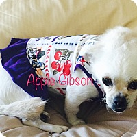 Adopt A Pet :: APPLE GIBSON - SO CALIF, CA