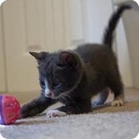 Adopt A Pet :: Gale - Savannah, GA