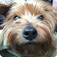 Adopt A Pet :: Miracle - pending adoption - Mount Laurel, NJ