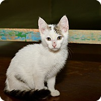 Adopt A Pet :: Ghost - San Antonio, TX