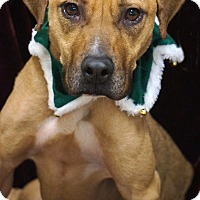 Adopt A Pet :: Meg - Newnan City, GA
