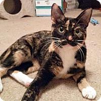 Adopt A Pet :: Mia - Arlington/Ft Worth, TX