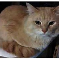 Adopt A Pet :: Vinny - Chicago, IL