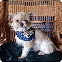 Adopt A Pet :: Mister Finn - Mooy, AL