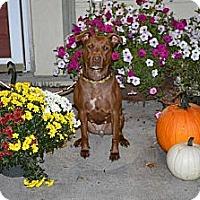Adopt A Pet :: Sadie - Roaring Spring, PA