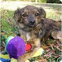 Adopt A Pet :: Mikey - Mocksville, NC