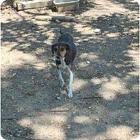 Adopt A Pet :: Mabel - New Boston, NH