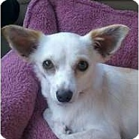 Adopt A Pet :: Peaches - Rowlett, TX