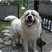 Adopt A Pet :: Jack Frost - Wayne, NJ