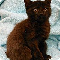 Adopt A Pet :: Ashley - Reston, VA