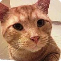 Adopt A Pet :: Leonardo - Summerville, SC