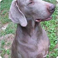 Adopt A Pet :: Rocco - Eustis, FL
