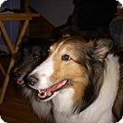 Adopt A Pet :: Lily