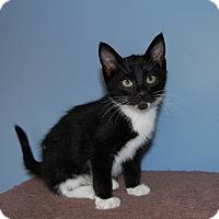 Adopt A Pet :: Tuxy - McDonough, GA