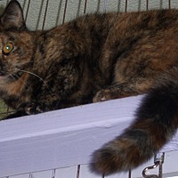 Adopt A Pet :: Sharla - Whittier, CA