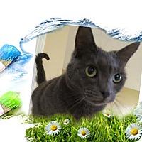 Adopt A Pet :: Diana - Harrisburg, NC