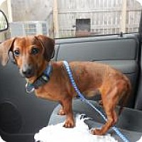 Adopt A Pet :: Mocha - Shawnee Mission, KS
