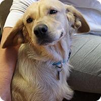 Adopt A Pet :: Sky - Knoxville, TN