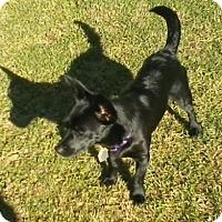 Adopt A Pet :: Jetta - Beavercreek, OH