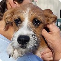 Adopt A Pet :: Fancy - Avon, NY