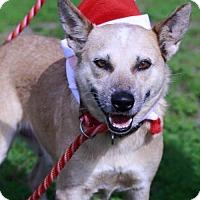 Adopt A Pet :: Cookie - Choudrant, LA