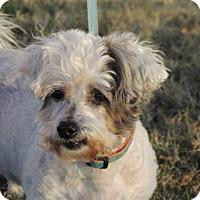 Adopt A Pet :: JAKE-SPECIAL NEEDS - Franklin, TN